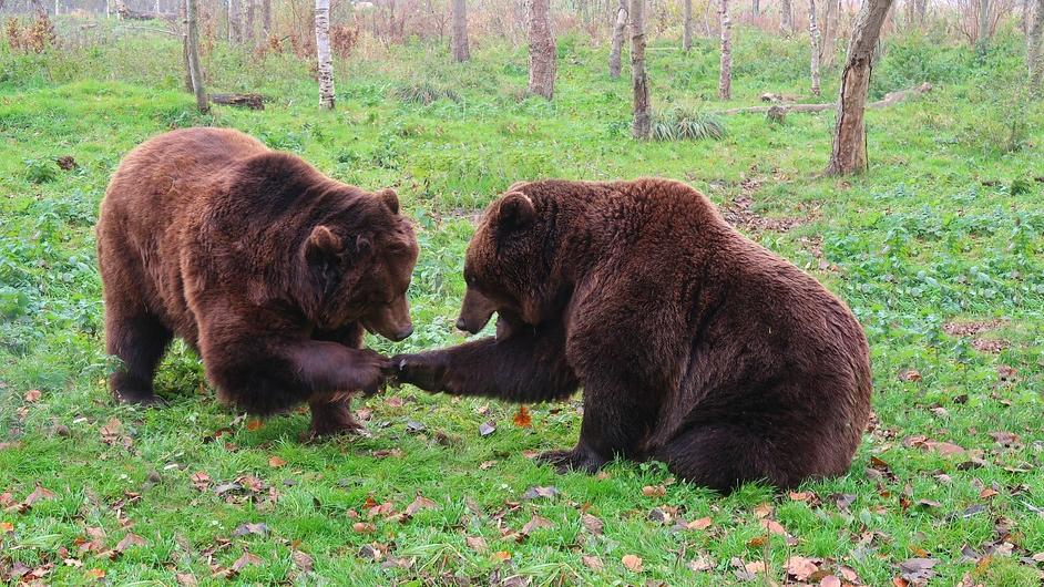 Охотники выслеживают двух медведей на территории промзоны в районе Кузовлевского тракта