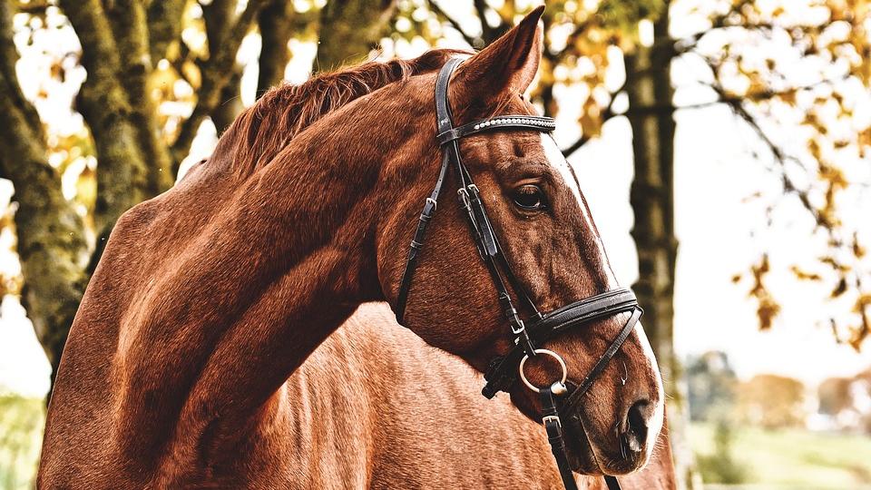 Карантин ввели в Парабели из-за опасной инфекции у лошадей