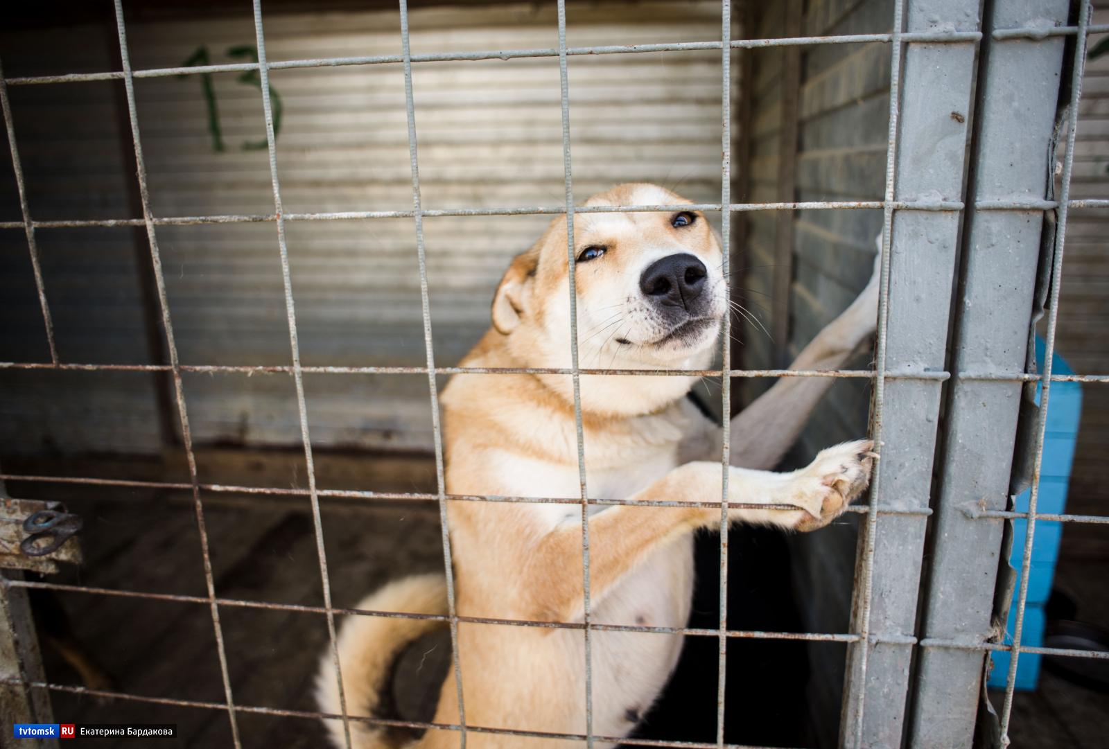 отдушиной приют для животных в кемерово фото организациях