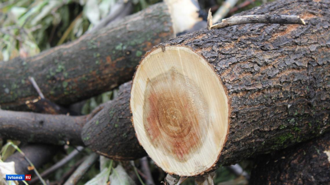 Спутники помогли обнаружить незаконную вырубку леса в Томской области
